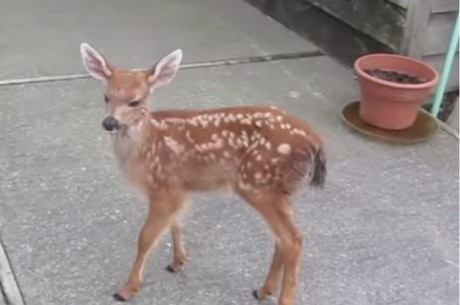 When This Rescued Fawn was Reunited with Her Mom, We Got Goose Bumps!