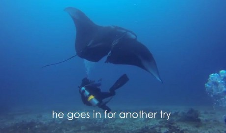 This Manta Ray had a Fishing Line Slicing Right Through Her Wing. Seeing These Divers Help Her is Breathtaking (VIDEO)