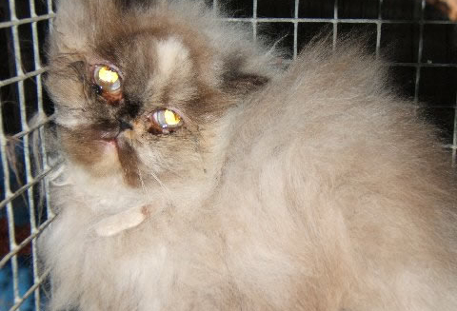 7 Alarming Truths on Kitten Mills