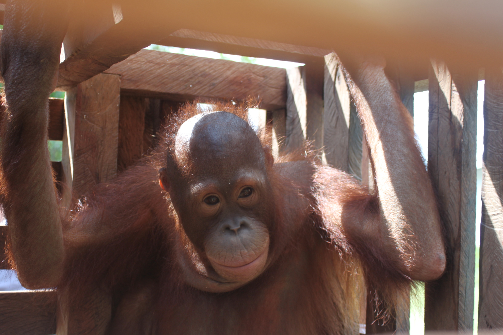Meet Obi and Muria, two Tiny Orangutans That Were Left Helpless at the Hands of the Palm Oil Industry