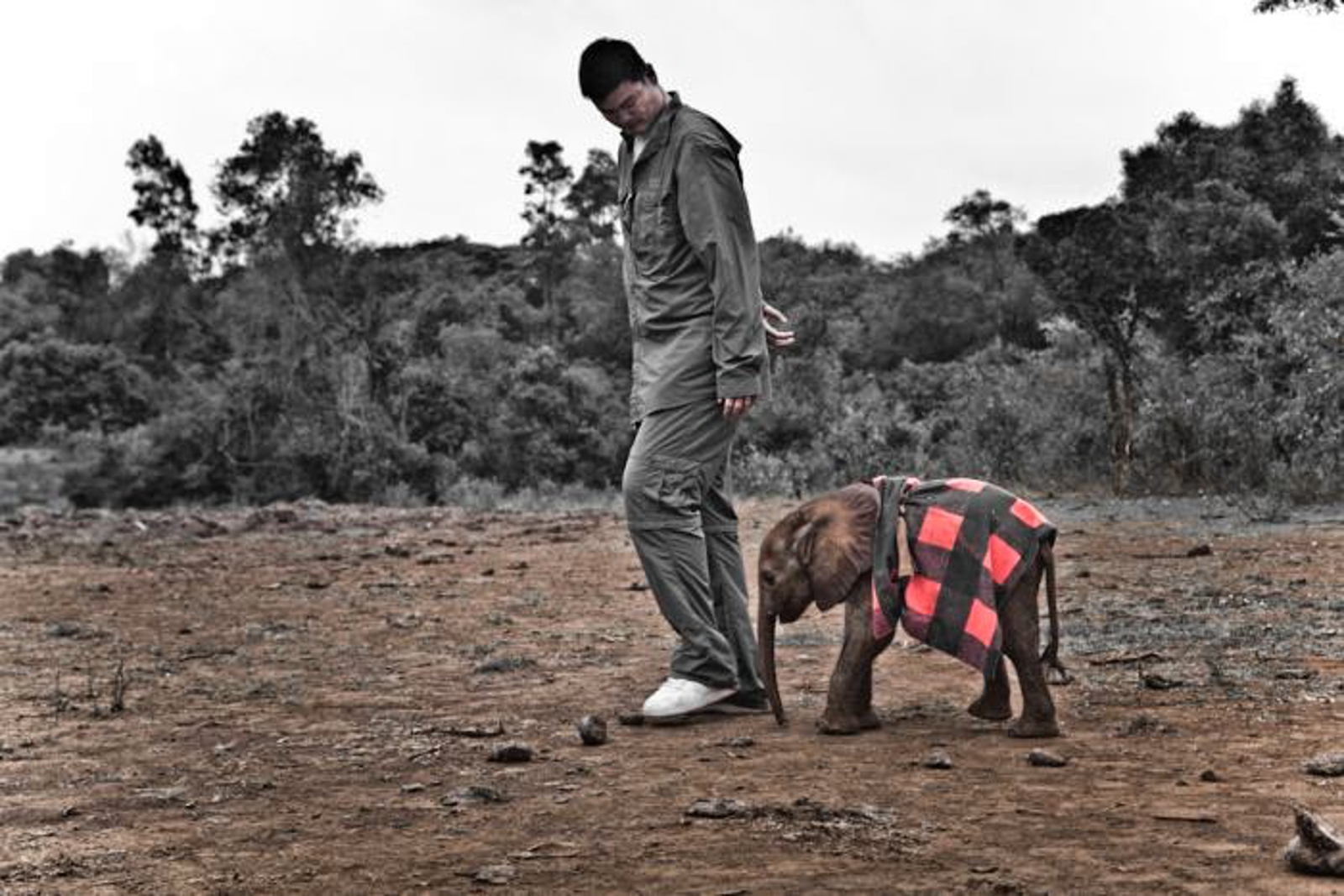 6 Celebrities Fighting to End the Illegal Wildlife Trade