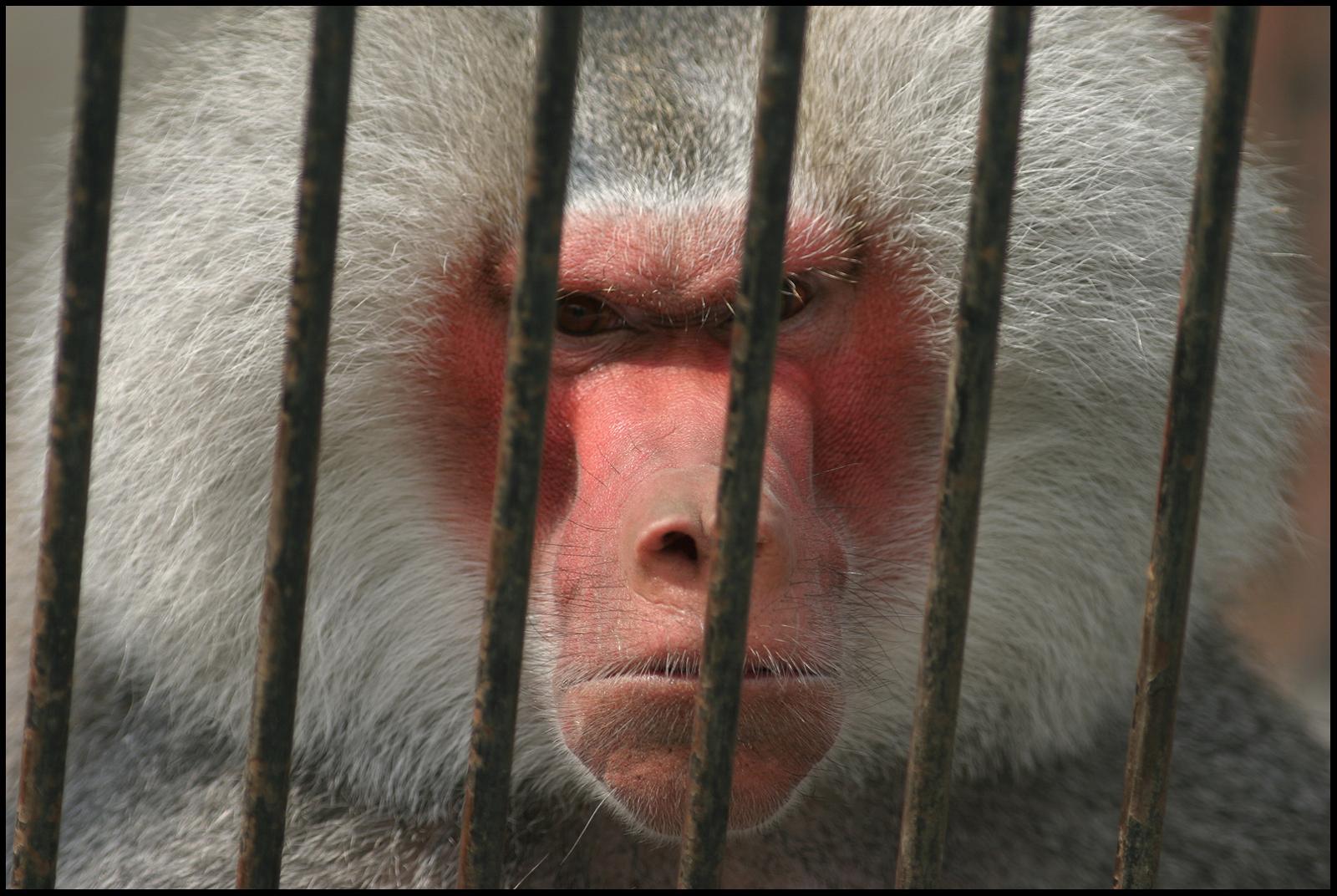 5 Organizations That Still Kill Animals Even Though Alternatives Exist