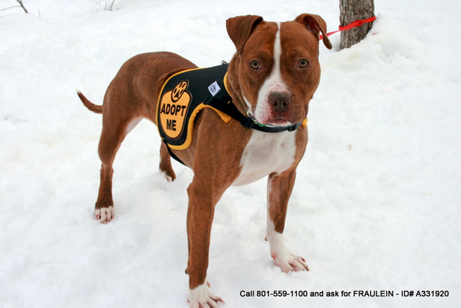 10 Facts About Breed-Specific Legislation (BSL) & How You Can Help Stop It