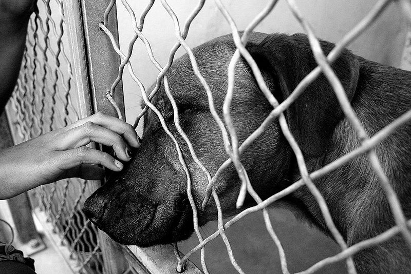 What I Learned From Volunteering at an Animal Shelter