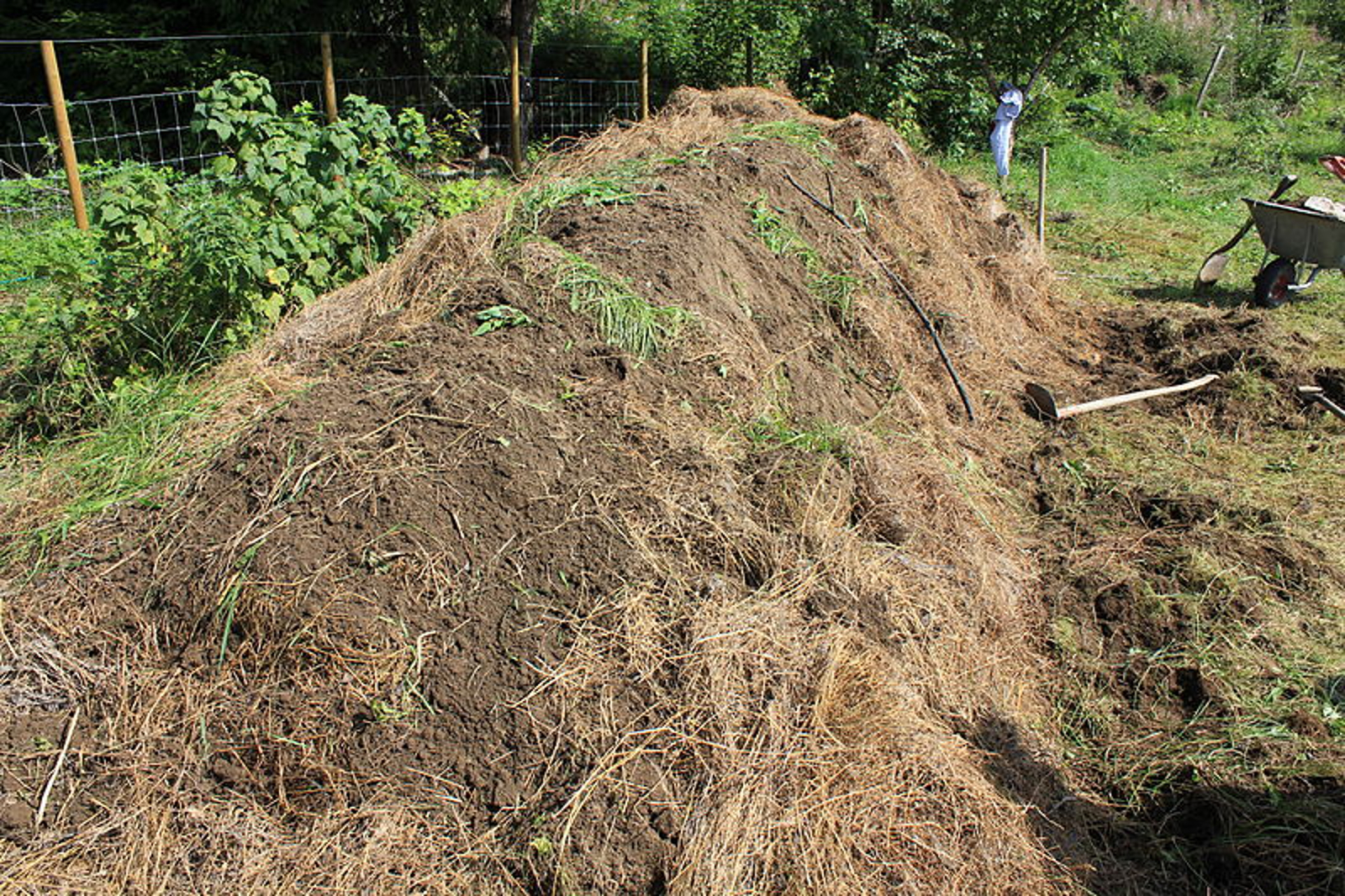 Food Forests and Other Innovative Gardening Ideas in Permaculture