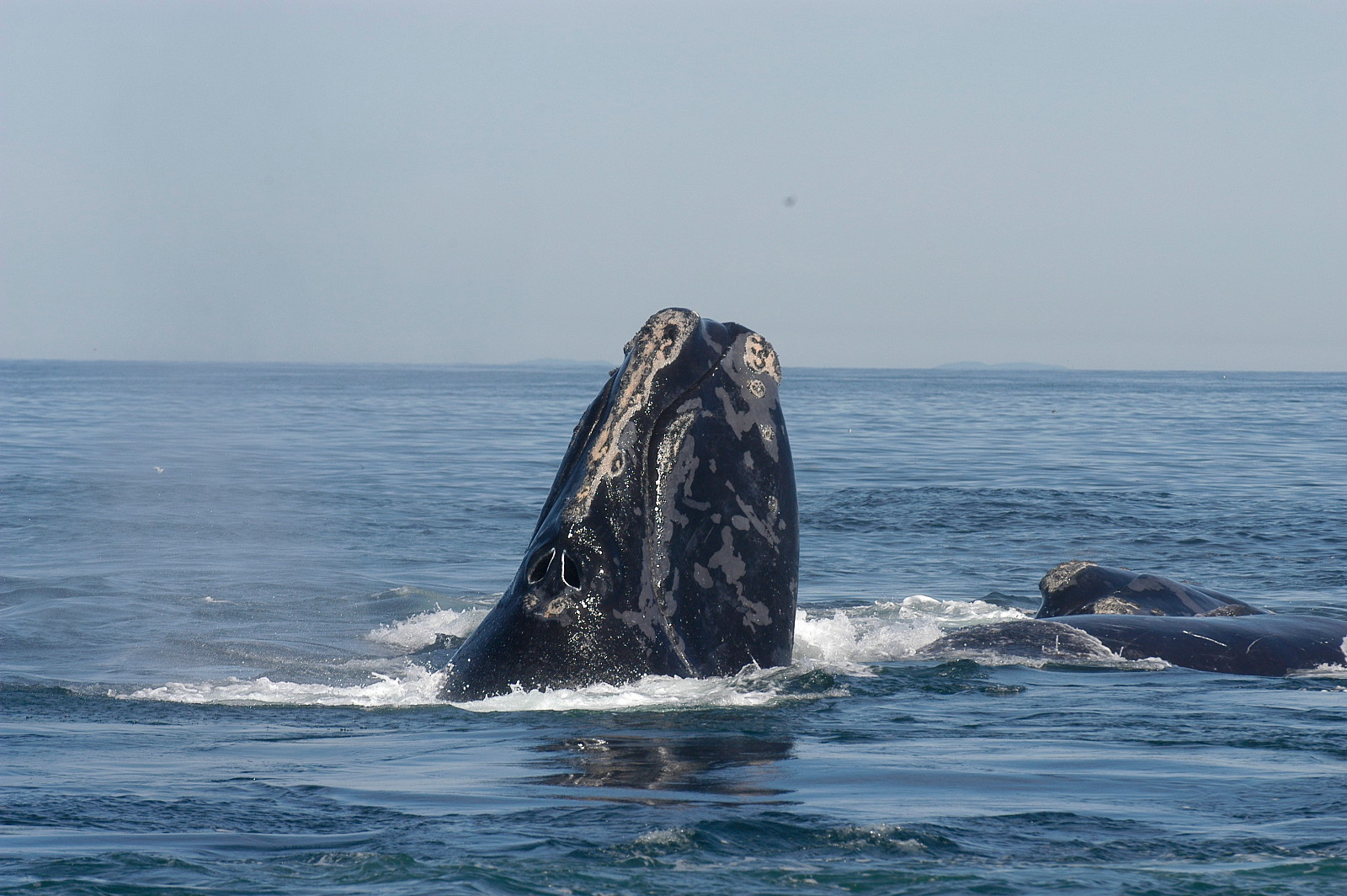 Regina Easterly: Ocean Planning or Pandering–Obama Administration OK's Seismic Testing Along U.S. East Coast