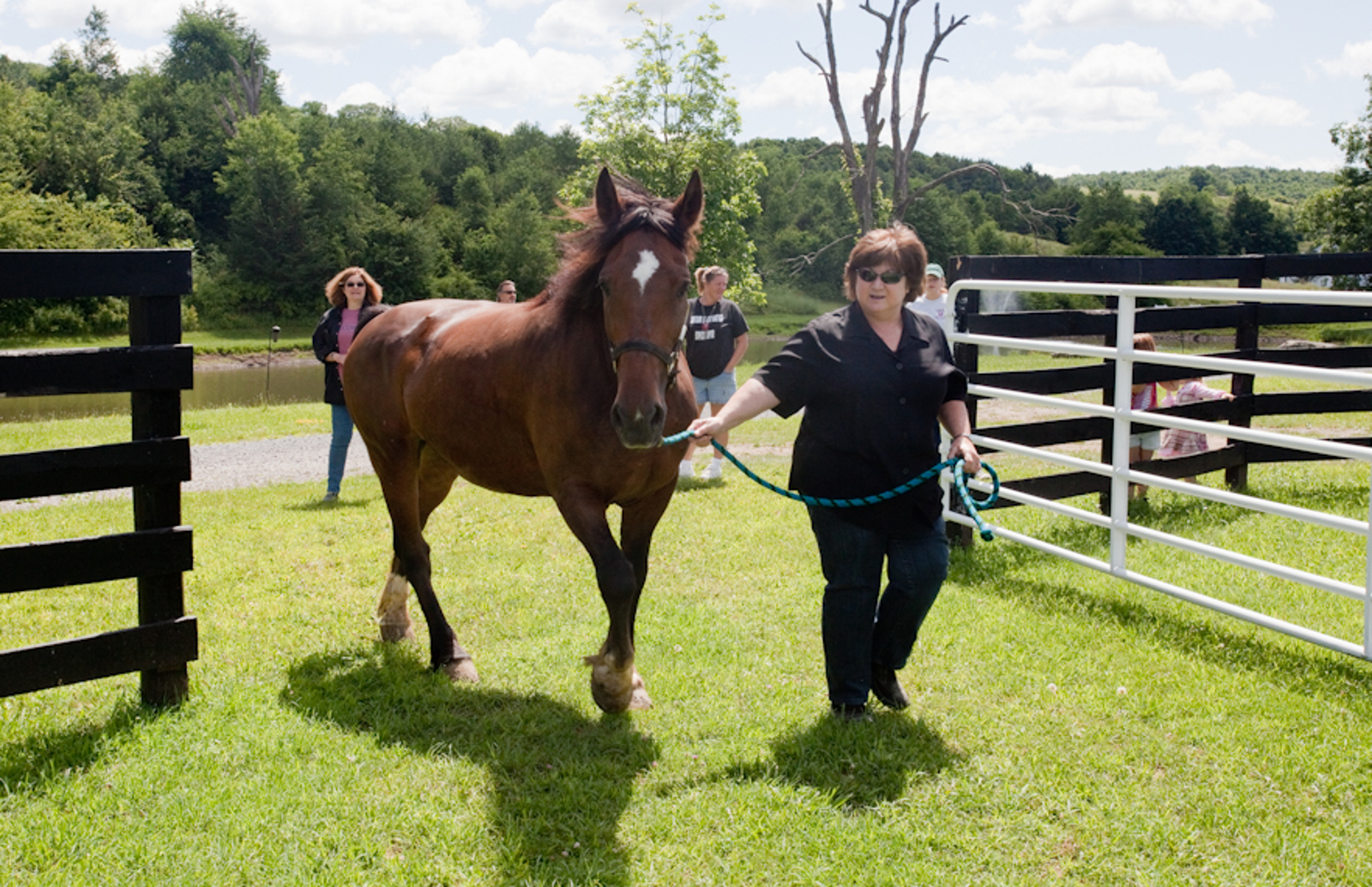 After Serving Seven Years as a Carriage Horse, Bobby II Gets a Lifelong Vacations