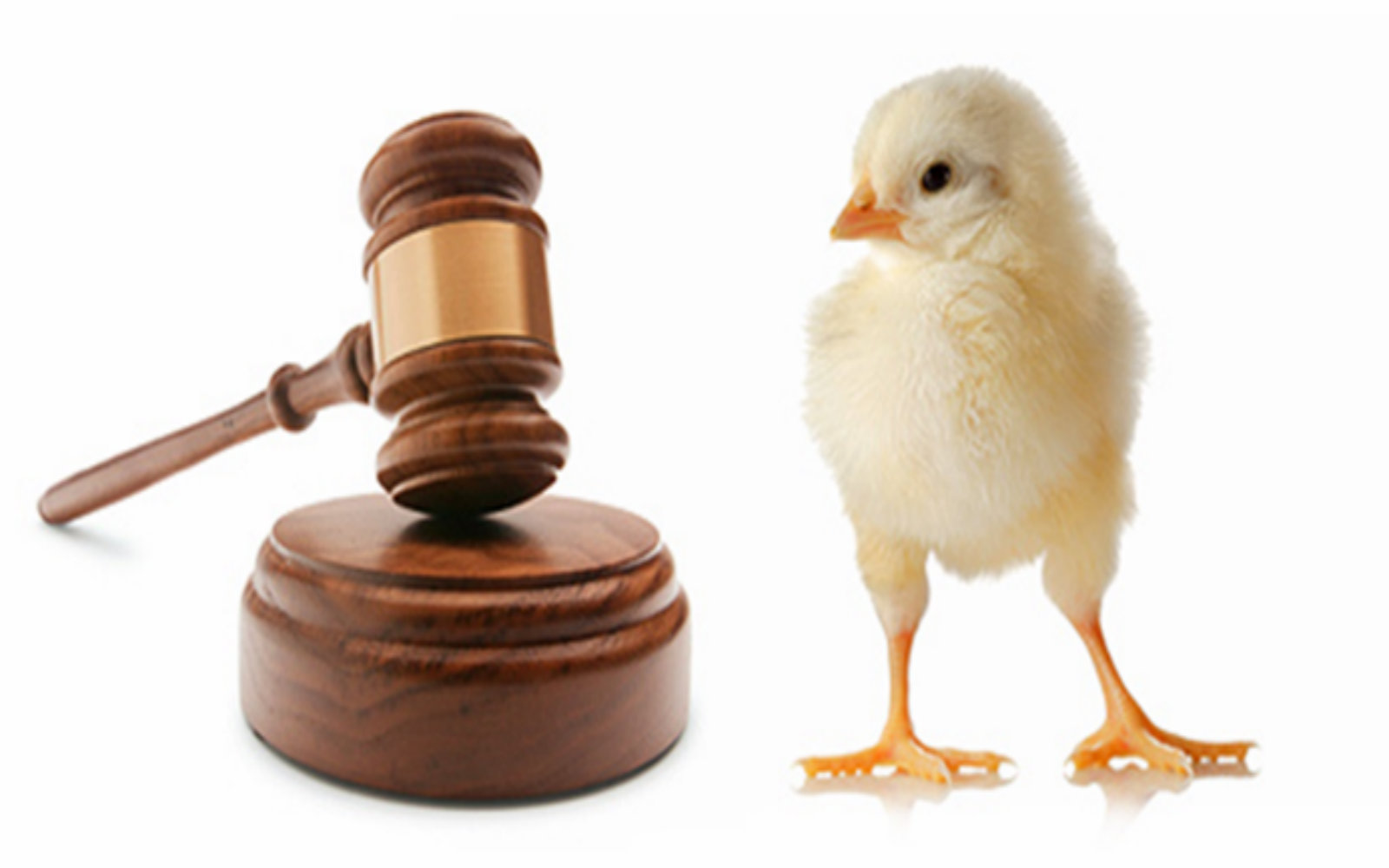 What Rights? Examples of Animal Cruelty That Are Perfectly Legal