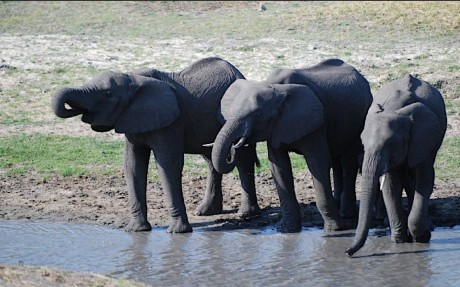 The Life of Animals in Captivity Versus the Wild
