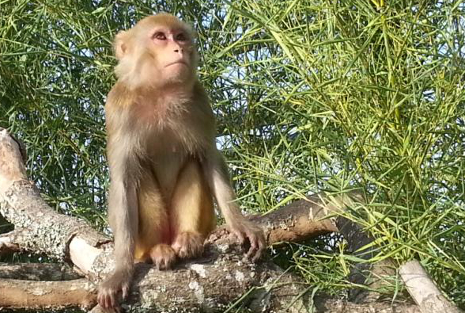 One Monkey's Journey From Life in a Cage to Freedom at a Texas Sanctuary