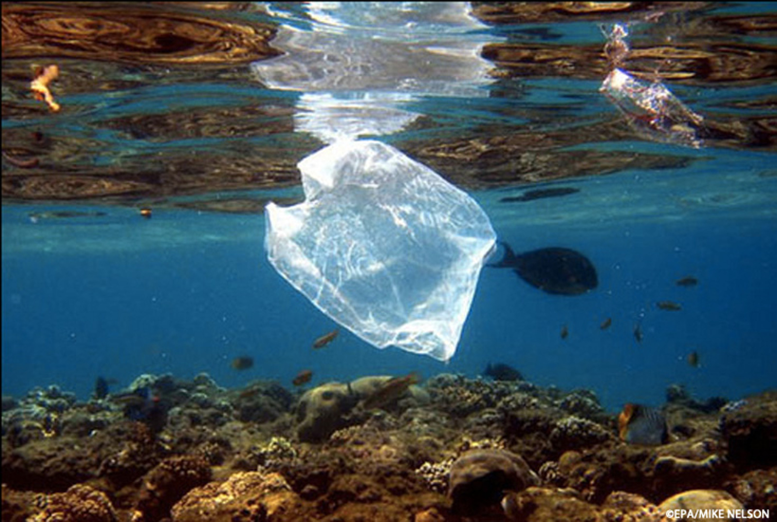 Nicholas Mallos: The Five Myths (and Truths) About Plastic Pollution in Our Ocean