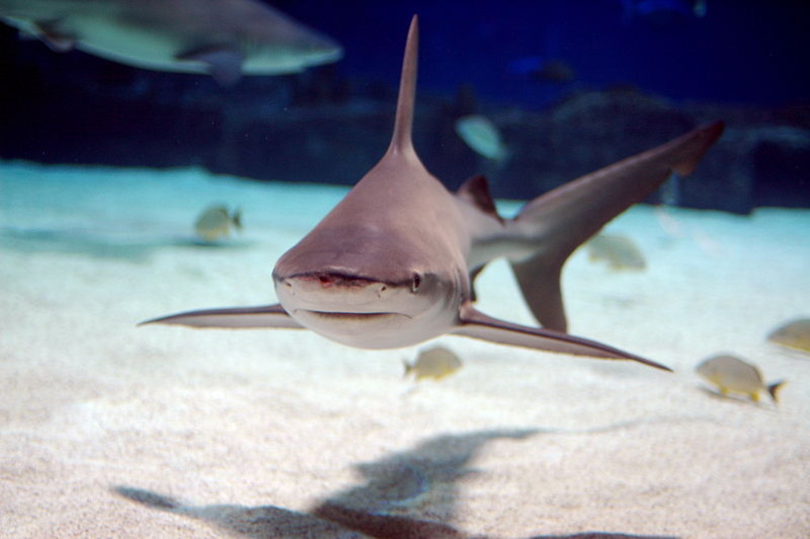 5 Time Sharks Needed Our Help and Amazing Humans Did the Right Thing