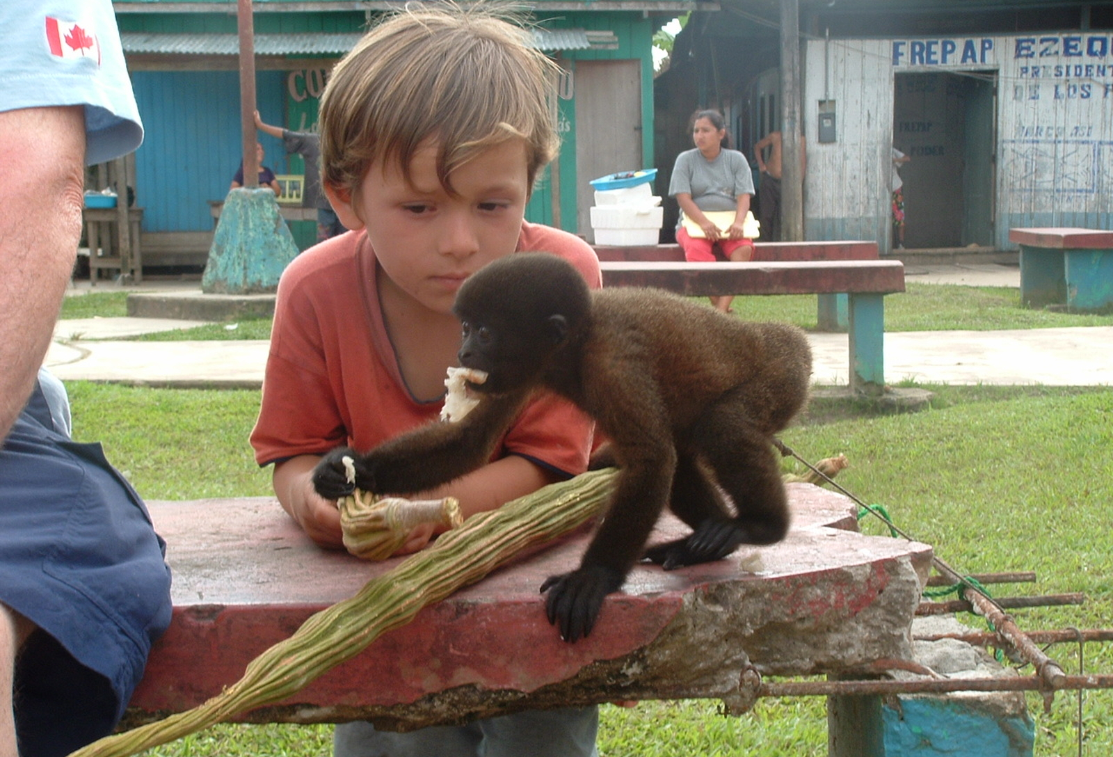 Animals That are Victims of the Exotic Pet Trade