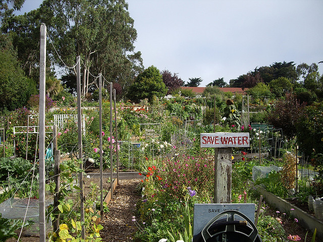 How To Keep A Garden Alive with Watering Restrictions