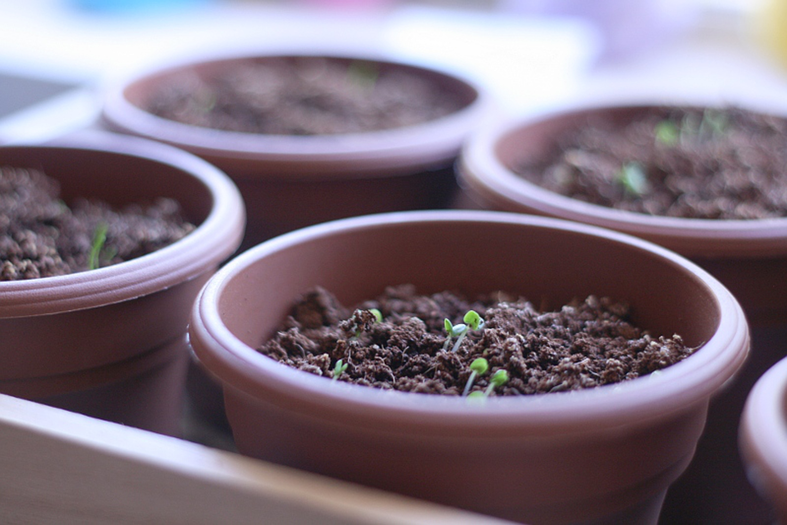 Why A Cardiologist Cares About Soil Quality (And Why You Should Too)