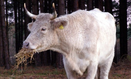 How Livestock Feed is Killing the Environment
