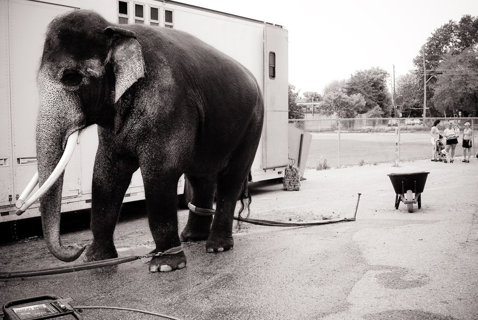 7 Common Ailments Suffered by Circus Animals