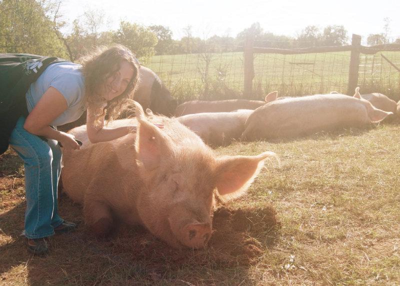 pig at sanctuary
