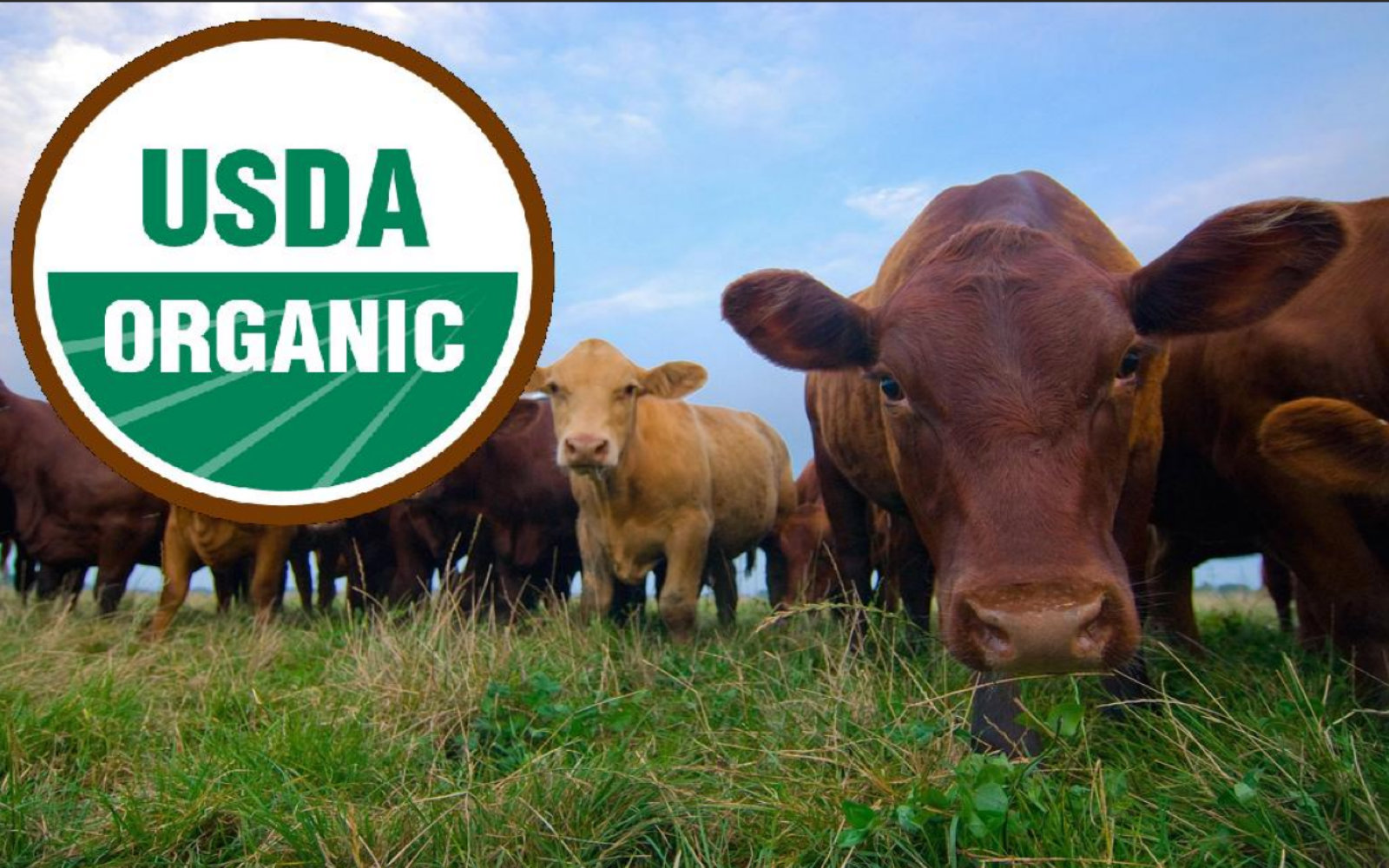 When To Choose Organic Animal Products Over Vegan Alternatives