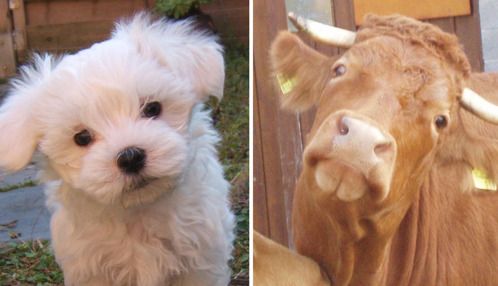 9 Ways Farm Animals Are Just Like Cats and Dogs