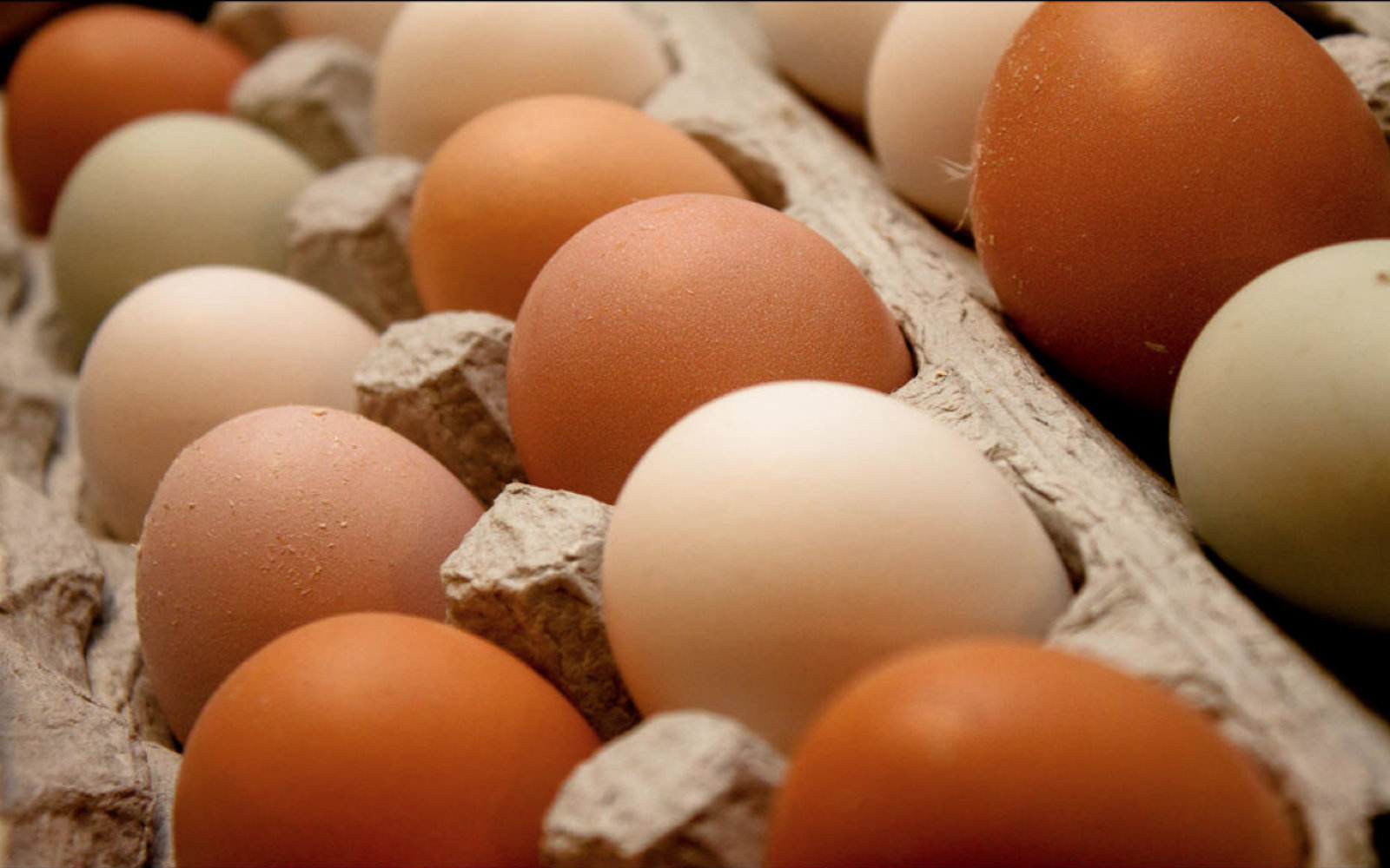 10 Shocking Facts About Egg Production
