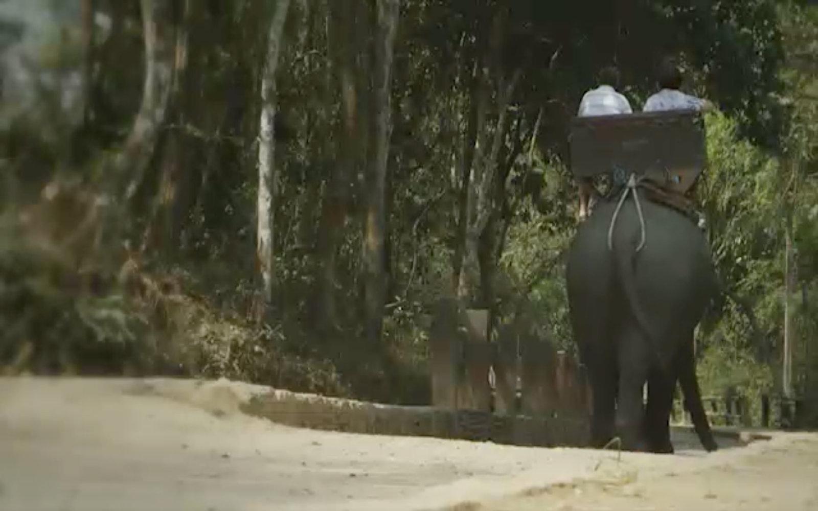 The Shocking Secrets of Thailand's Elephant Tourism