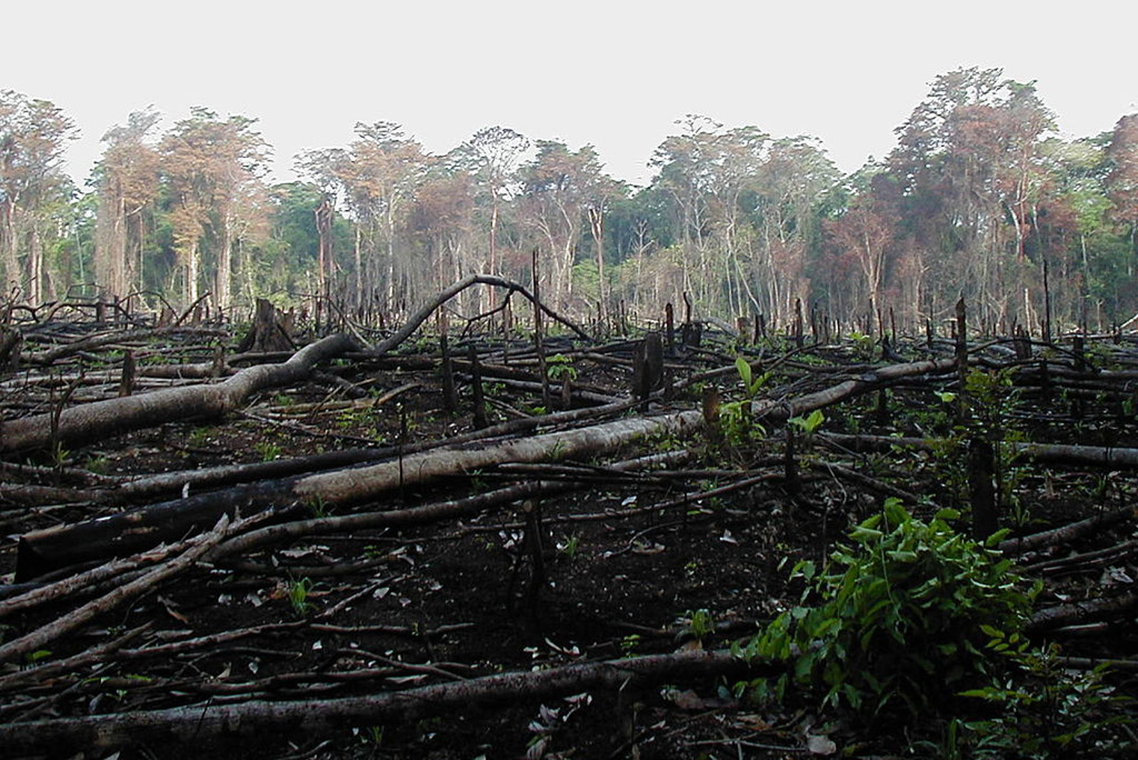 As Fall's Trends Hit the Runway, Ask Yourself: Are You Wearing Rainforest Destruction?