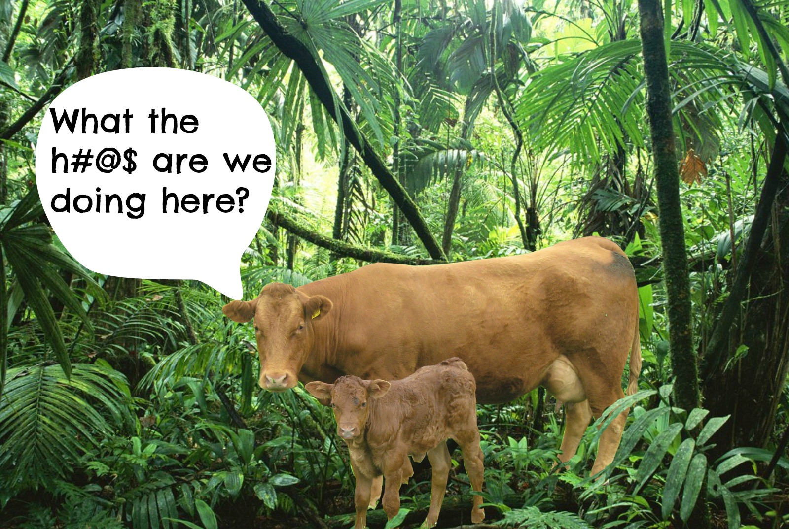 5 Reasons Why Cows Don't Belong in the Rainforest