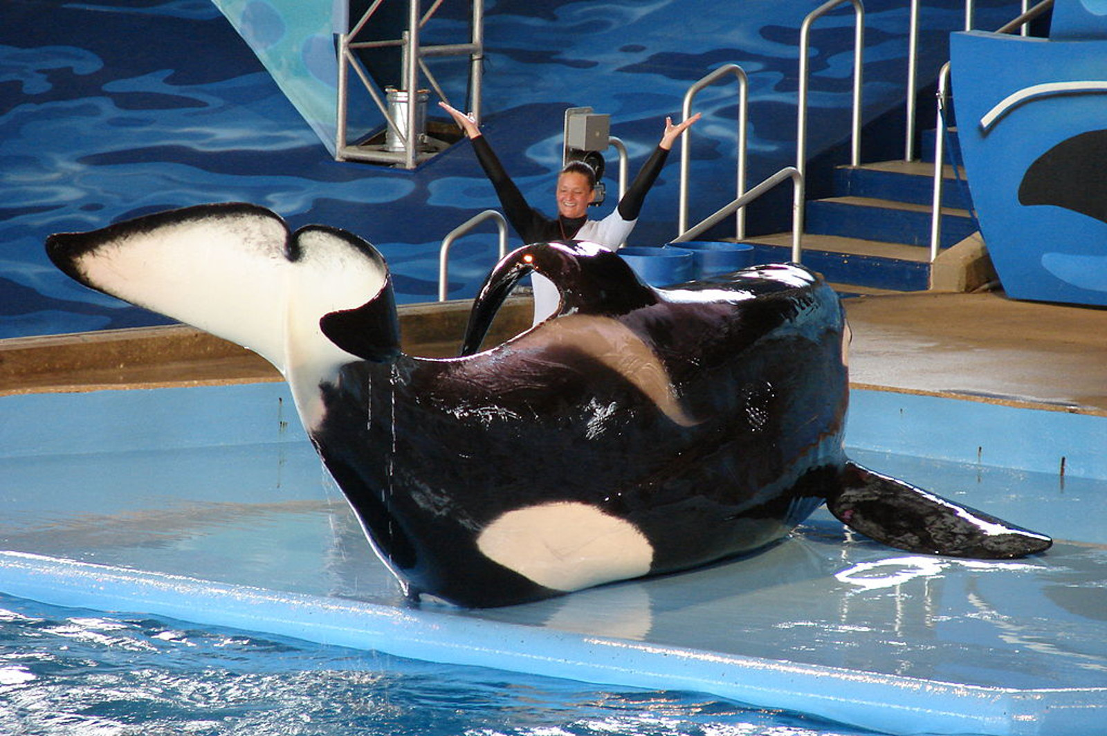 Can It Be?! WWF Condones Animal Suffering at SeaWorld
