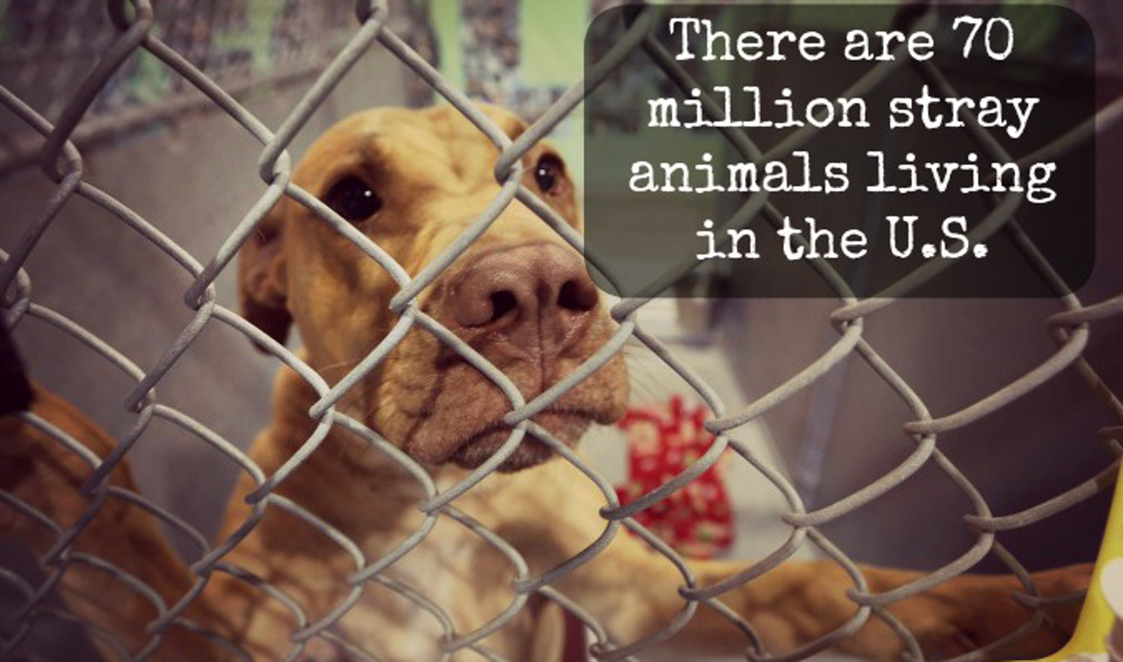 The Faces Behind Homeless Animal Statistics