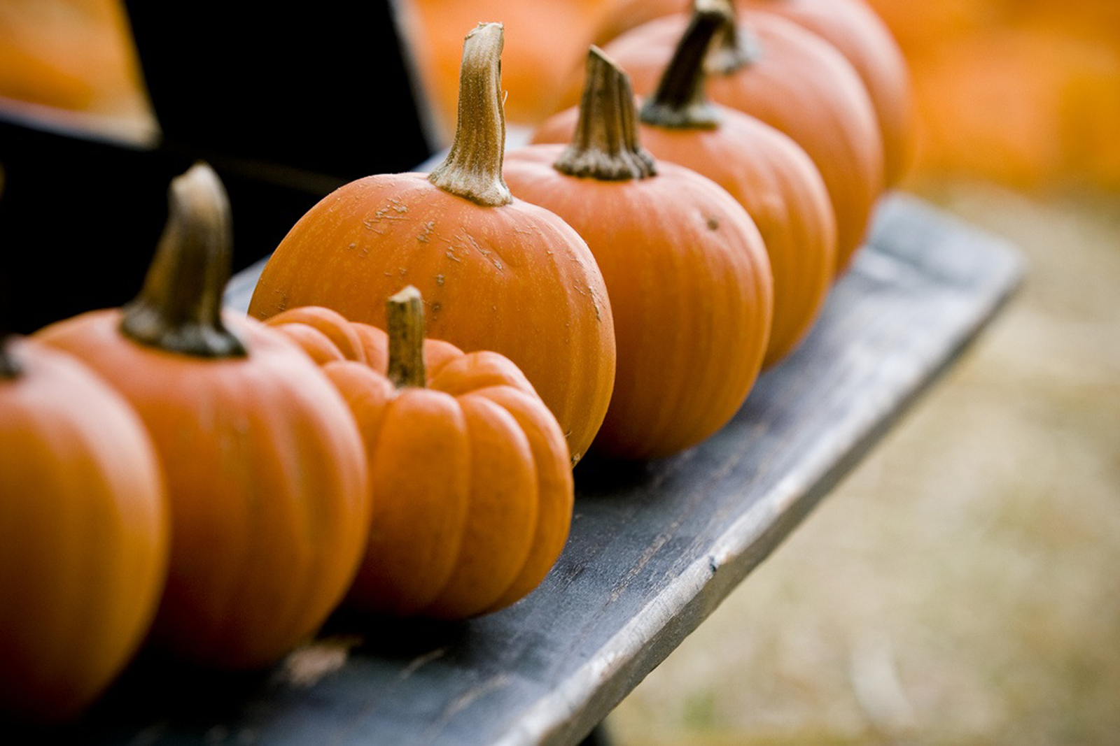 Pumpkin is Not Just for Eating! Here are 5 Ways to Use it On Your Skin