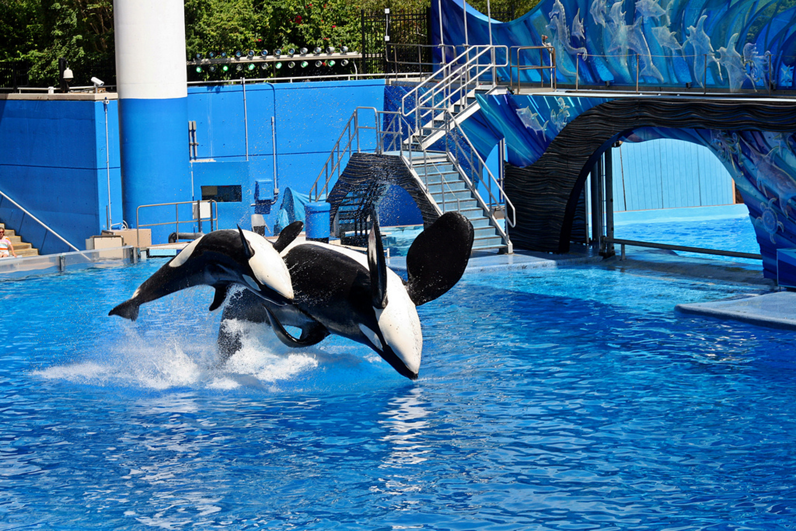 Are SeaWorld's Rescue and Rehab Programs All They're Cracked Up to Be?