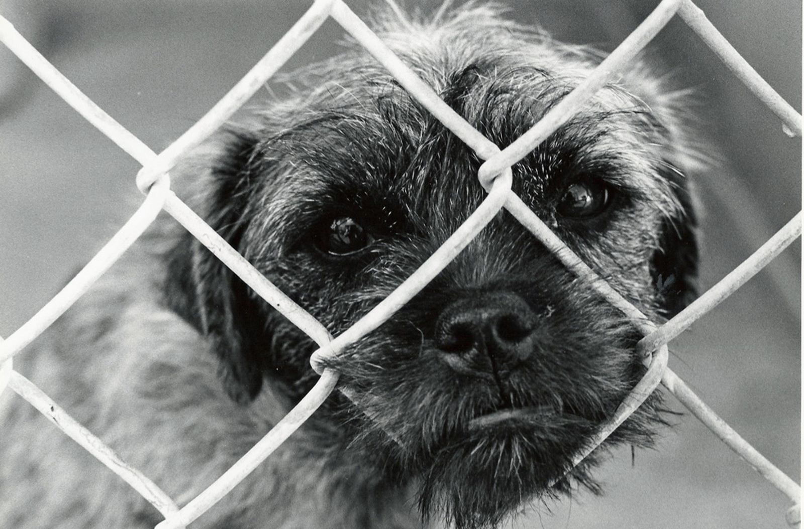 5 Ridiculous Myths About Shelter Pets