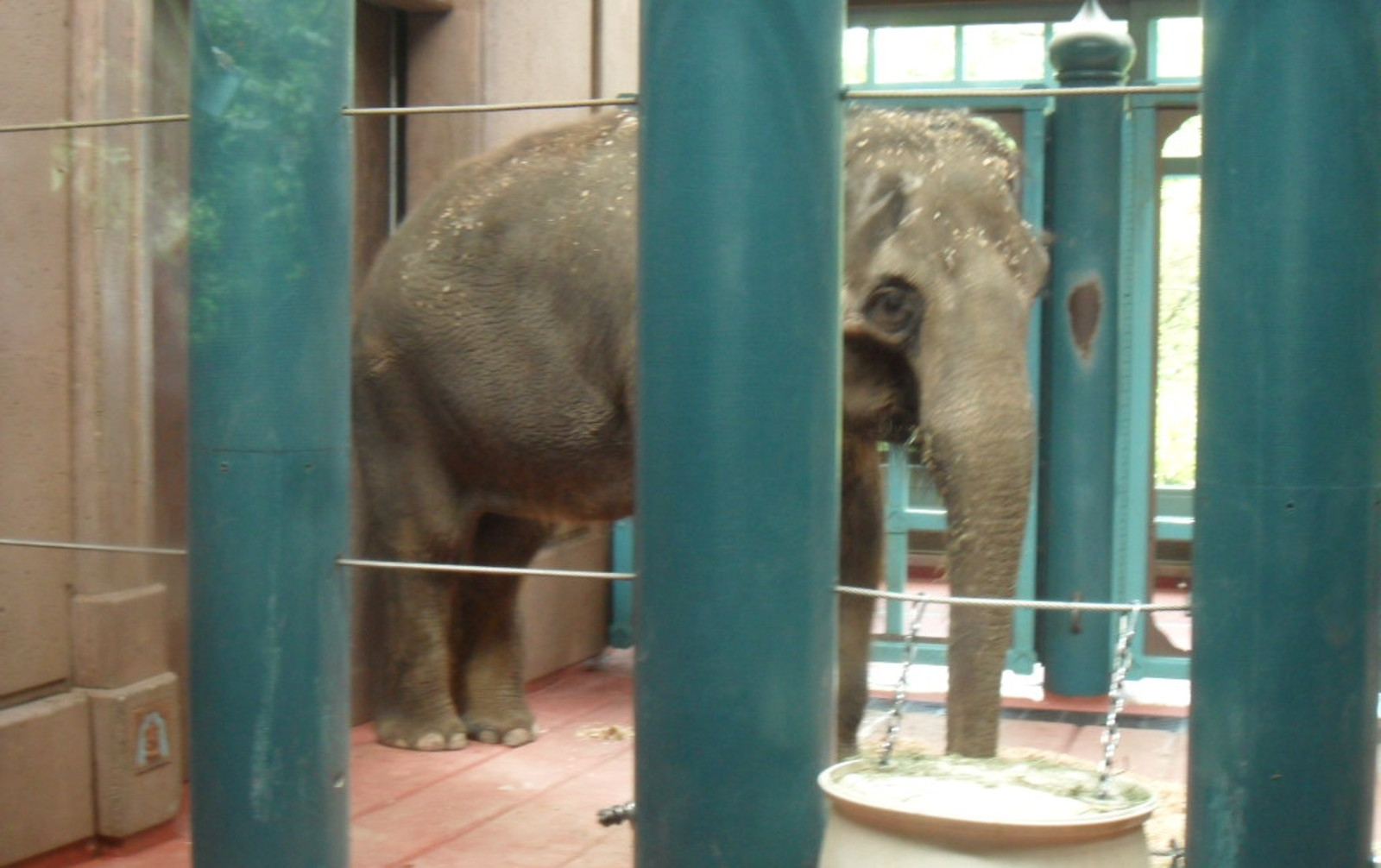EXPOSED! Woodland Park Zoo: An Elephant's Nightmare