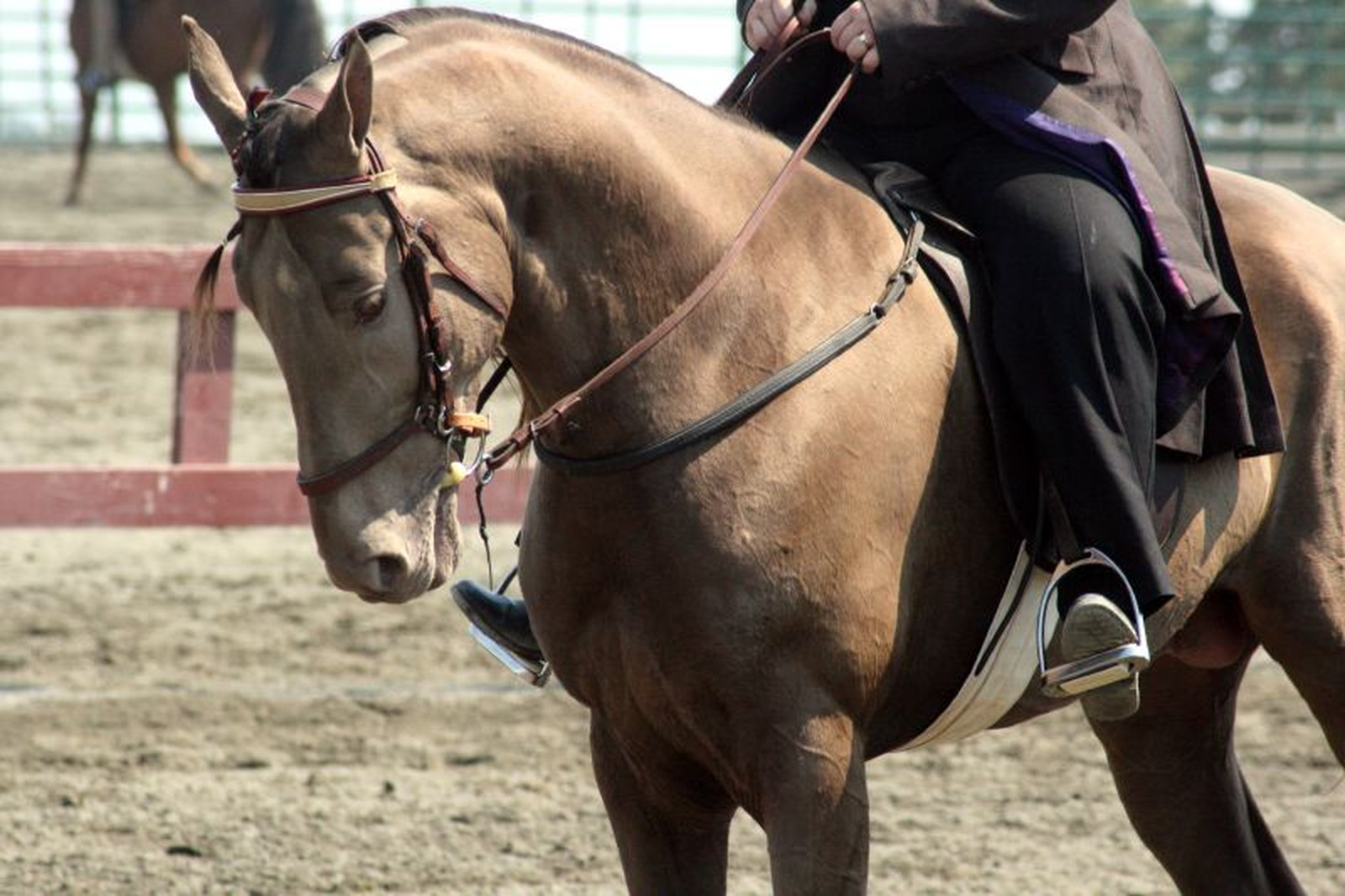 EXPOSED! Tennessee Walking Horse Celebration: Celebrating Cruelty?