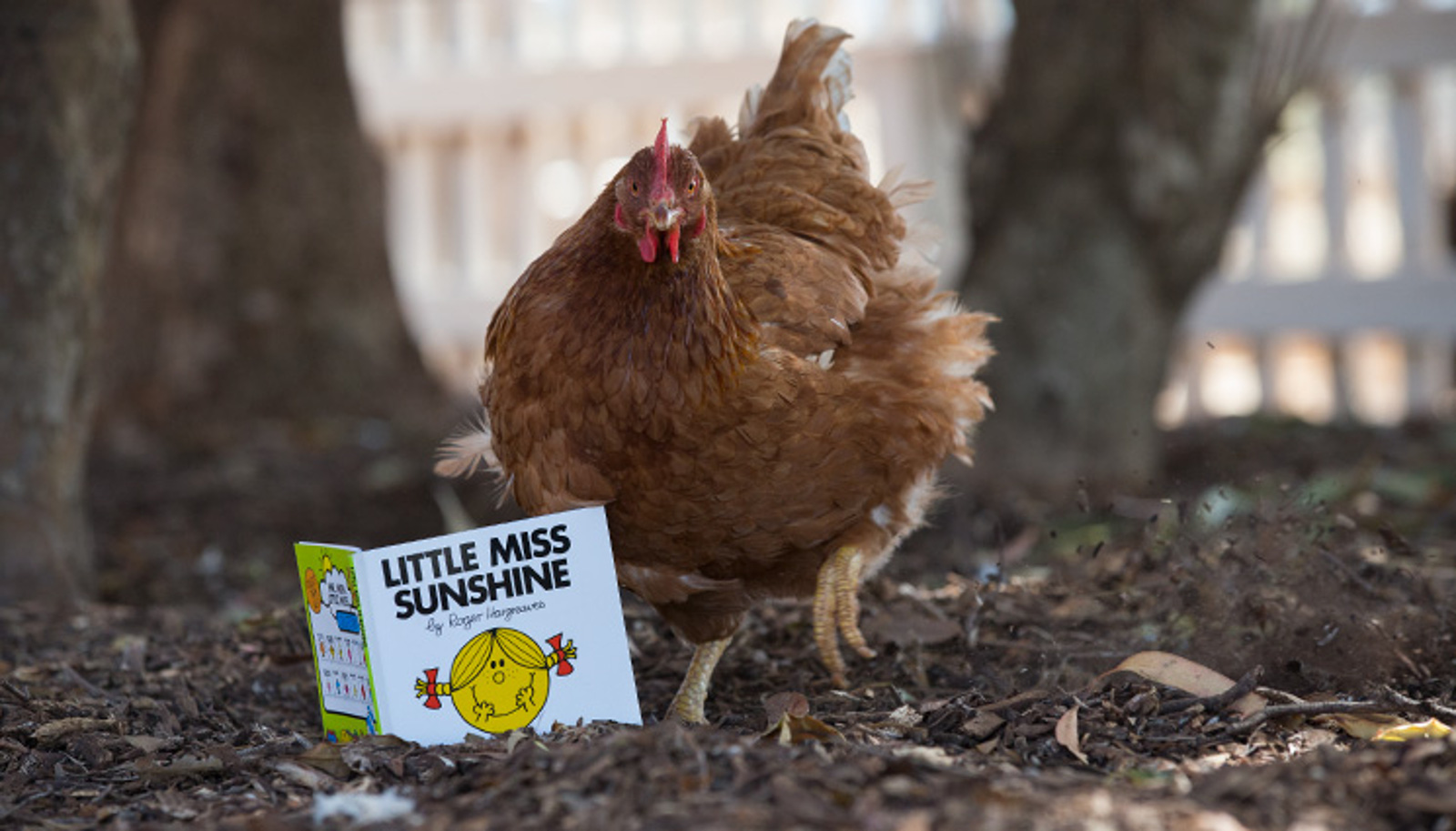 Rescued Battery Hen Shows the World Chickens Are as Intelligent as Cows, Pigs, Dogs, and Even Humans
