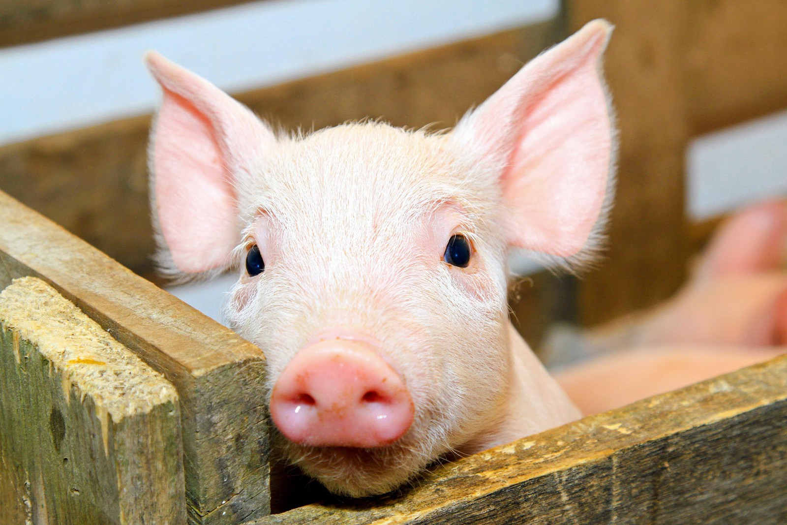 The Animal Agriculture Industry Fails Again Trying to Silence Whistleblowers