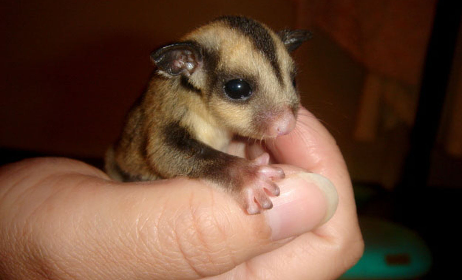 A Heaping Handful of Cuteness: 12 Baby Animals Who are Perfectly Palm Sized