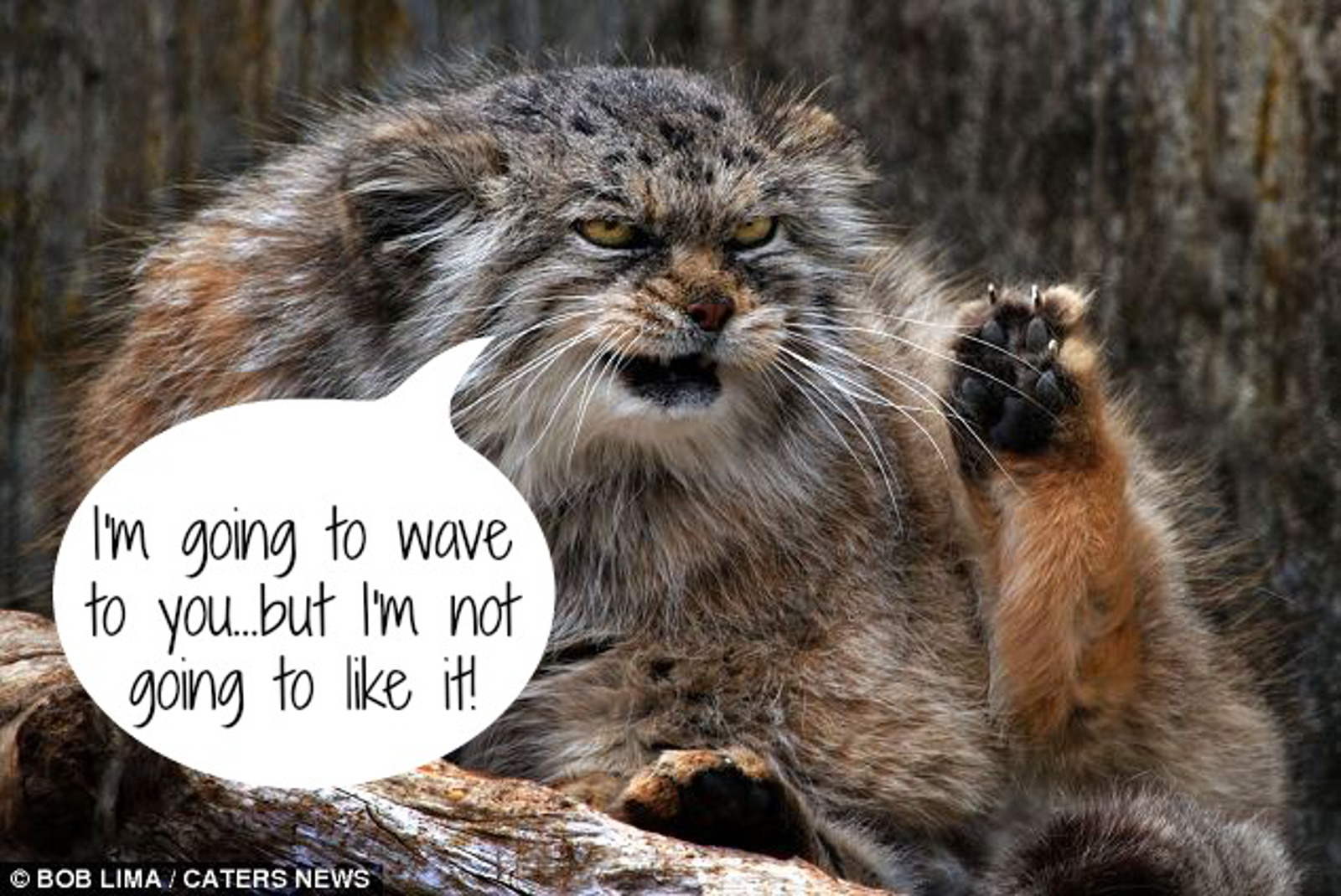Here's What Zoo Animals Have to Say About Life in a Cage