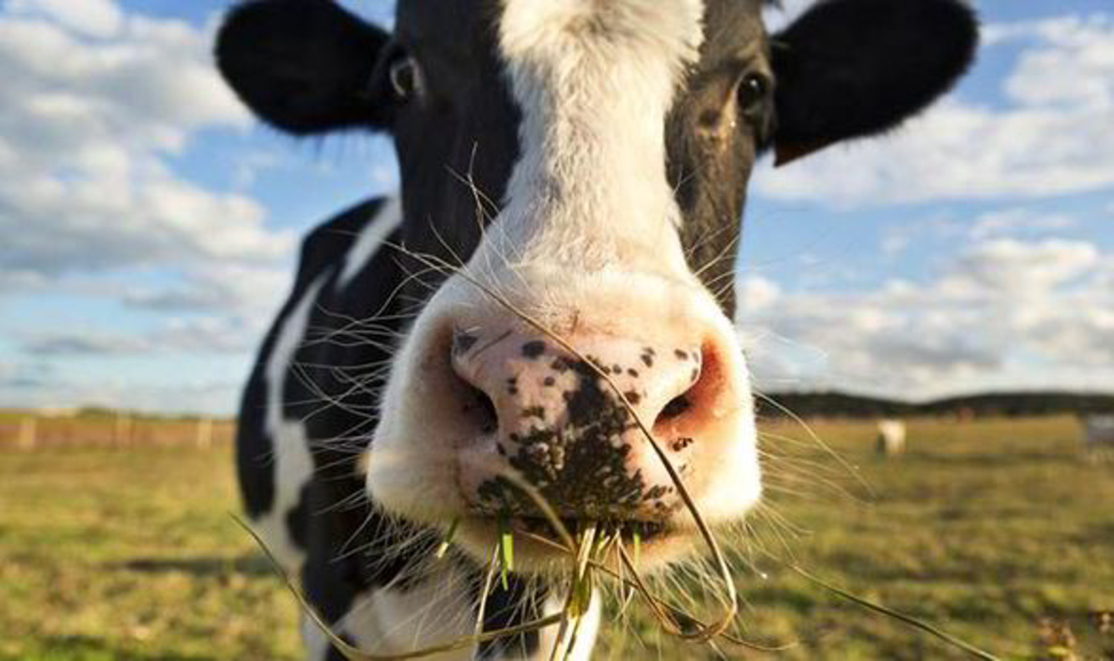 "Why Organic, Grass-Fed Livestock is Not as ""Sustainable"" as You Might Think"