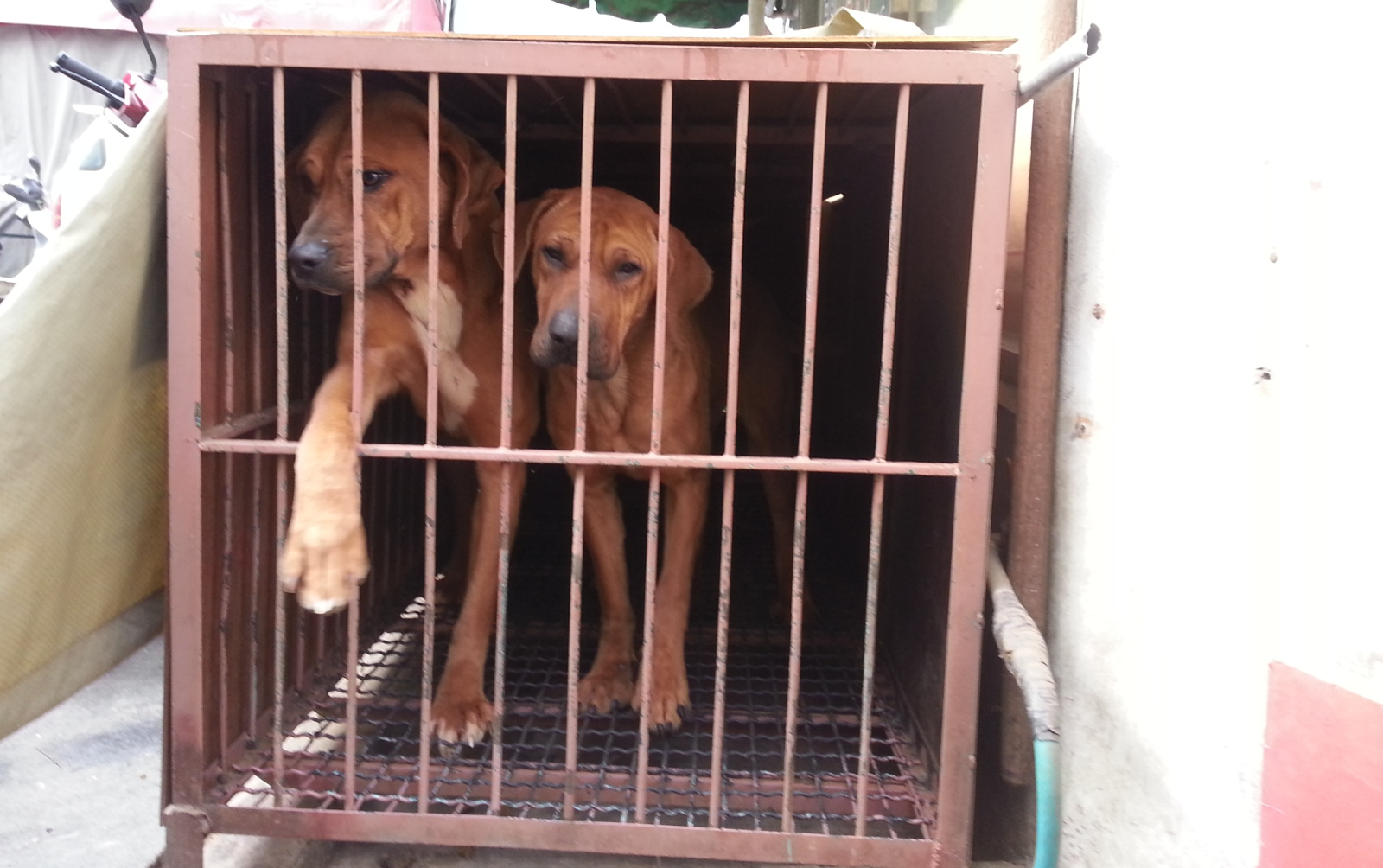 Culture Versus Compassion: Where Does South Korea Draw the Line on Dog Meat