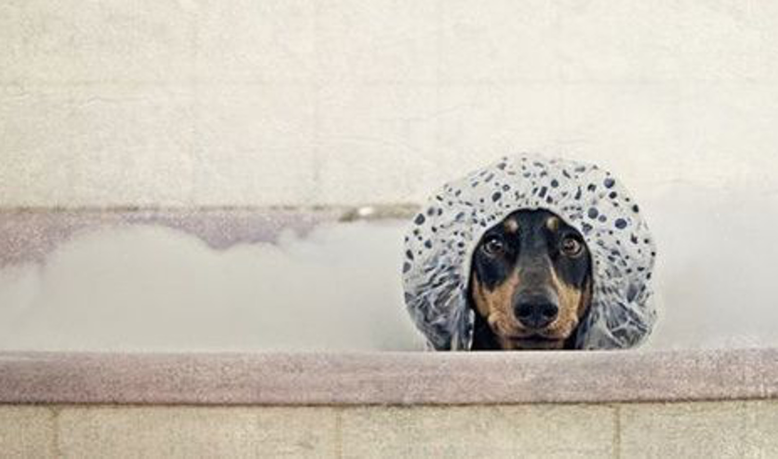 How, Why and When: The Ultimate Doggie Grooming Guide