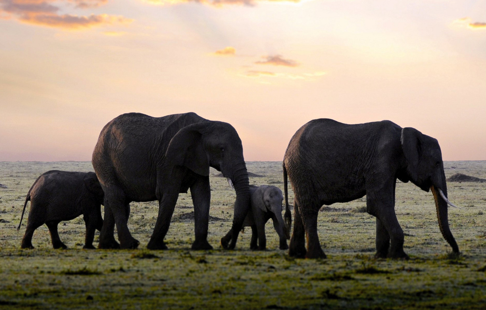 10 Ways Elephants Are Like Us