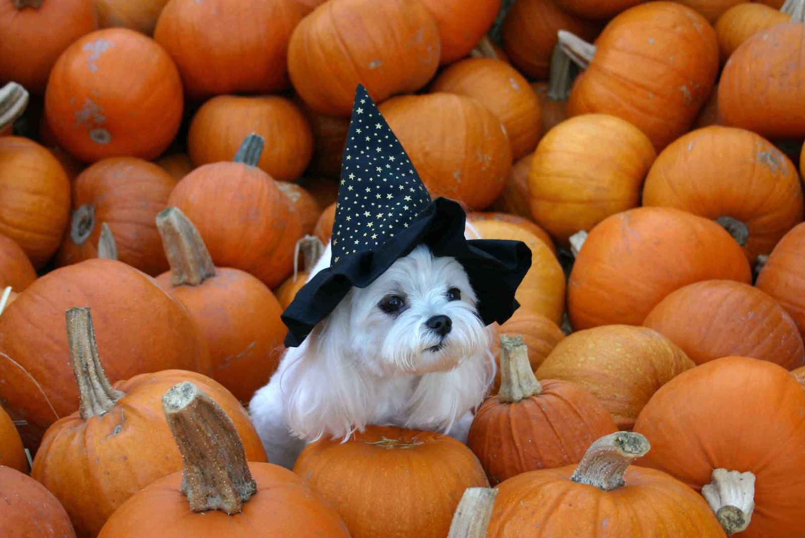 8 Tips for Every Pet Guardian to Keep in Mind This Halloween