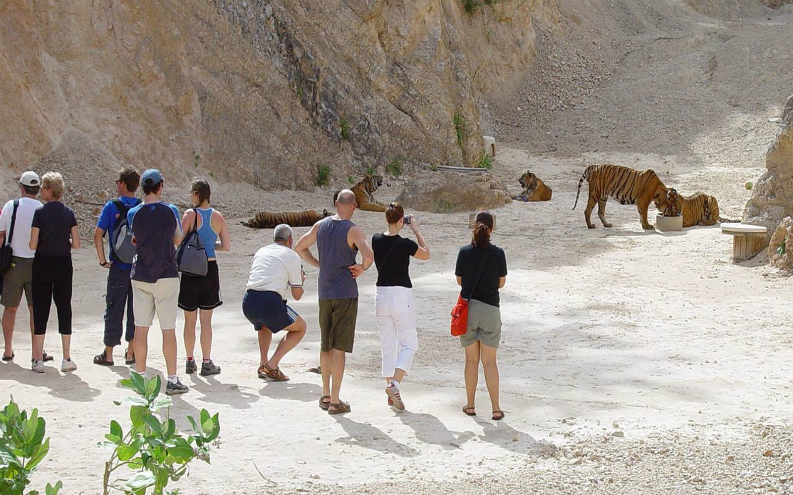 EXPOSED! Tiger Temple Thailand