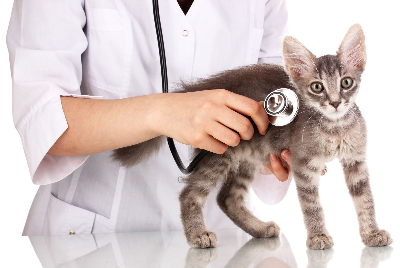 Why Regular Check-Ups Are Important for Dogs and Cats