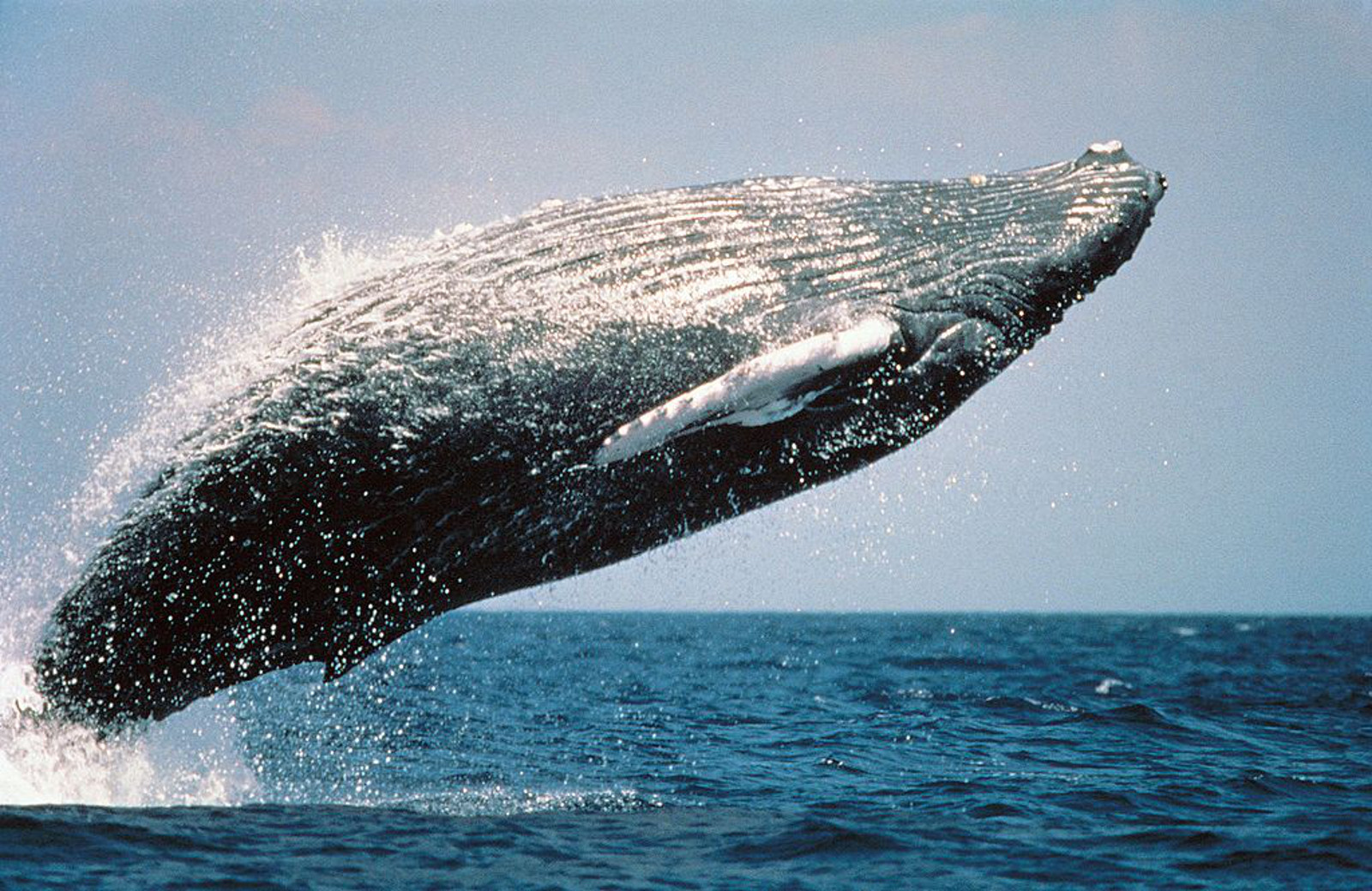 Whale Watching is in Full Swing in Norway! Check out These Amazing Views of Whales (PHOTOS)