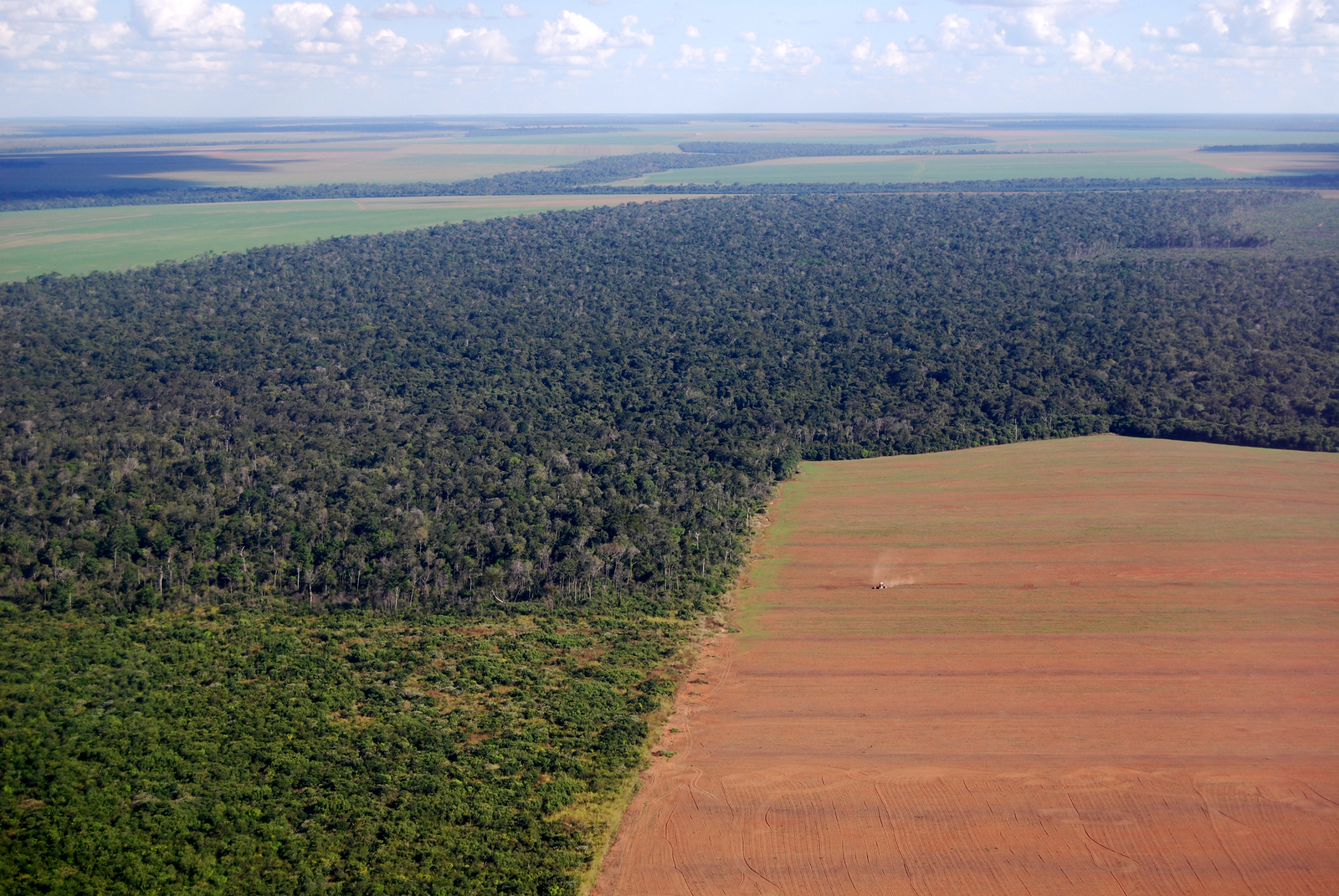 10 Things You NEED to Know About Soy Related Deforestation and the Shocking Way Your Diet can Fix it