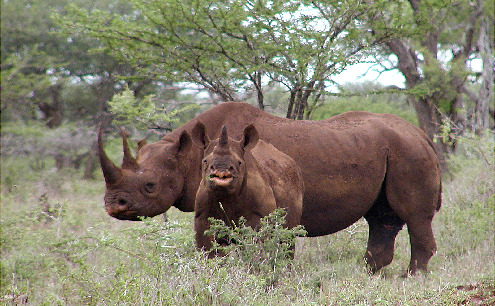 Trophy Hunting: A Major Threat to Conservation