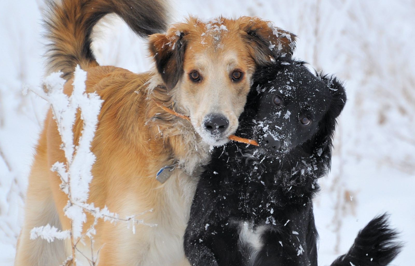 How to Protect Your Pet During Winter and Cold Weather